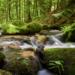 Wanderung Otterbachtal vorderer Bayerischer Wald Regensburg