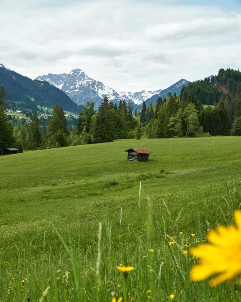 Hütte auf Allgäuer Almwiese in der Nagelfluhkette