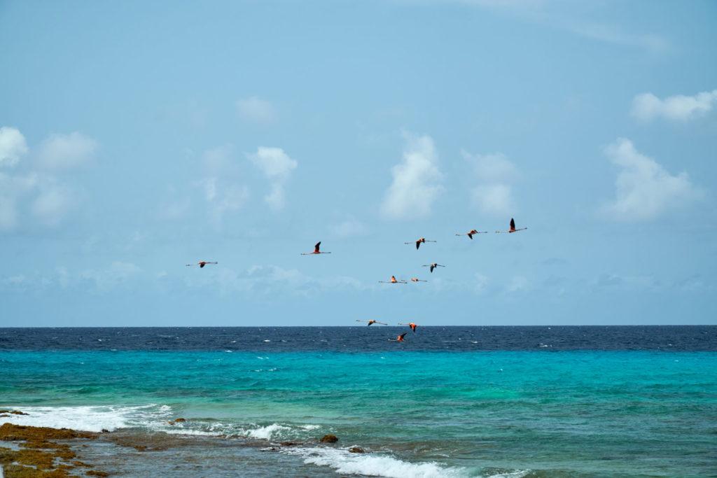 Kreuzfahrt Mein Schiff 5 kleine Antillen Bonaire