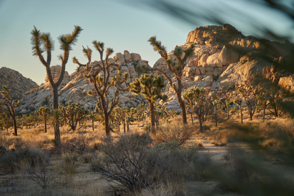 Die perfekte USA Roadtrip Route durch den Südwesten: Joshua Tree Nationalpark