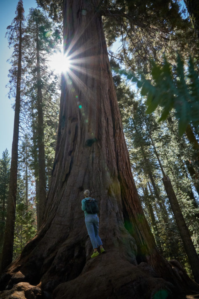 Die perfekte USA Roadtrip Route durch den Südwesten: sequoia nationalpark generals highway