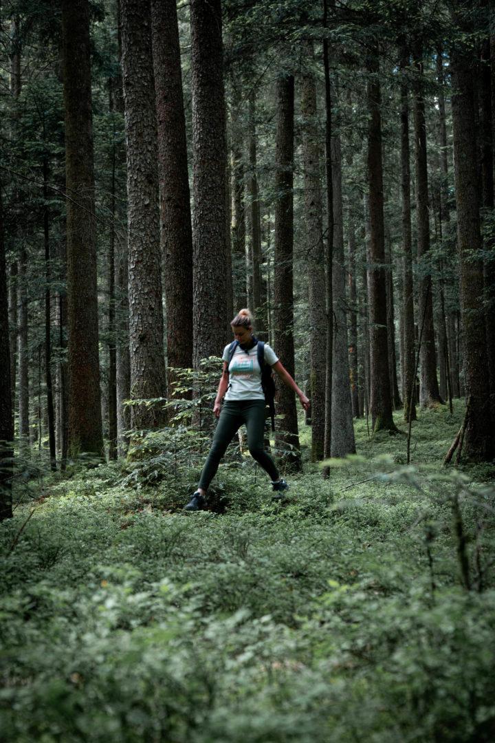 Traumhafte Waldwege durch den Schwäbisch-fränkischen Wald Wanderung
