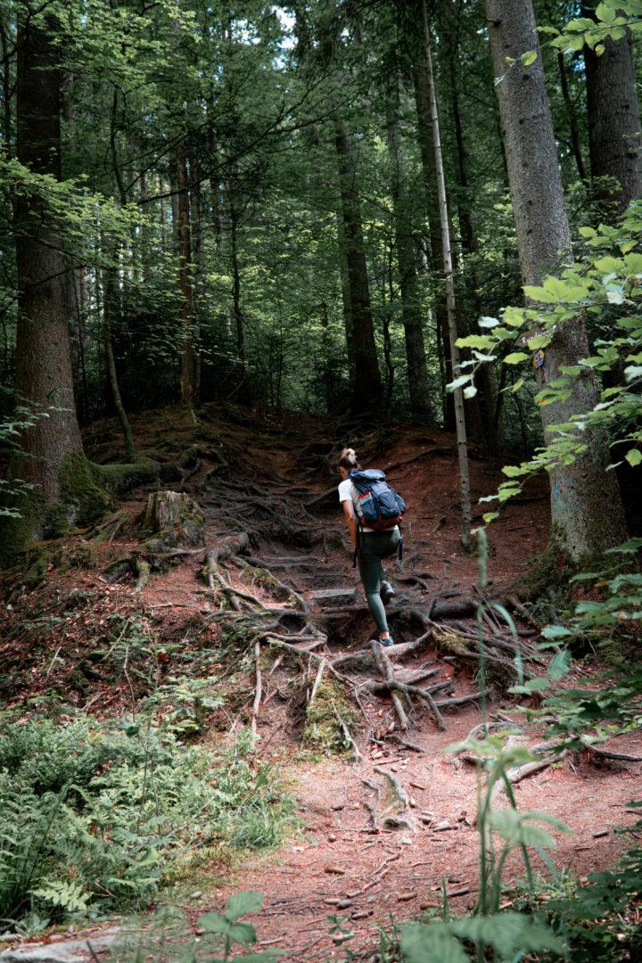 Naturschutzgebiet Brunnenklinge im Schwäbischen Wald