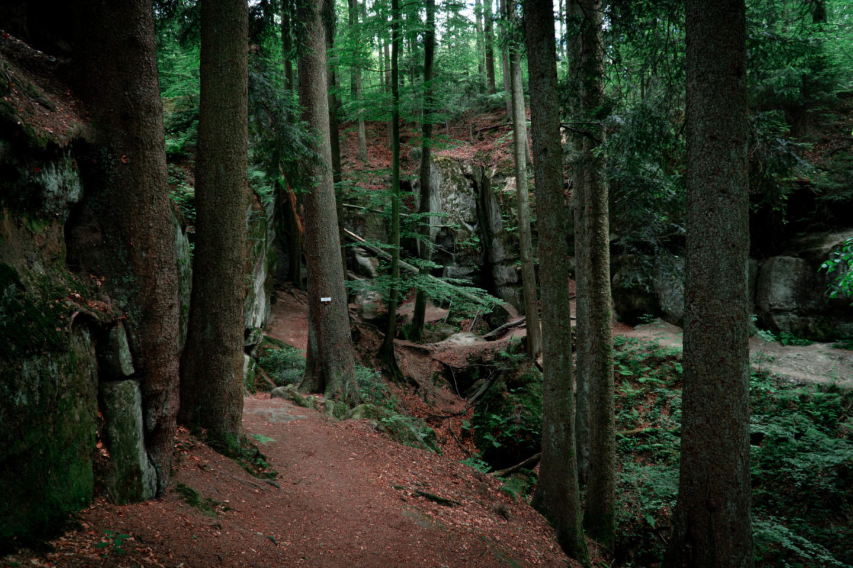 Naturschutzgebiet Schwäbischer Wald mit Brunnenklinge und Hägelesklinge Rundwanderung