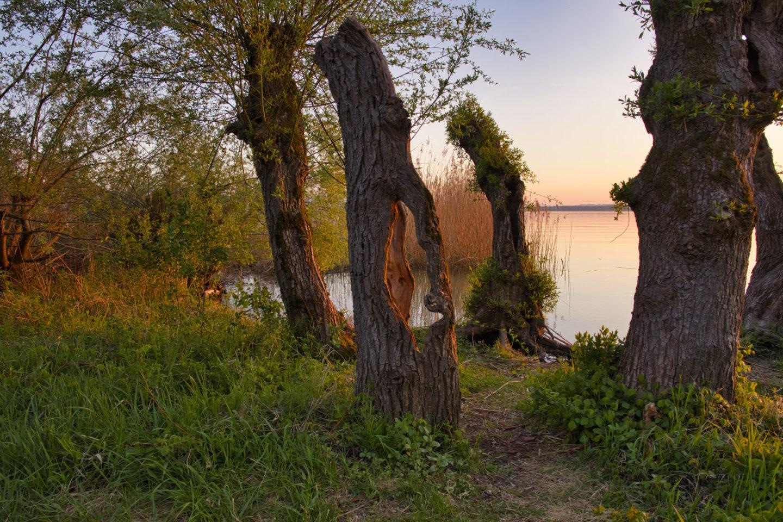 Weidenbäume am Chiemsee bei Sonnenuntergang.