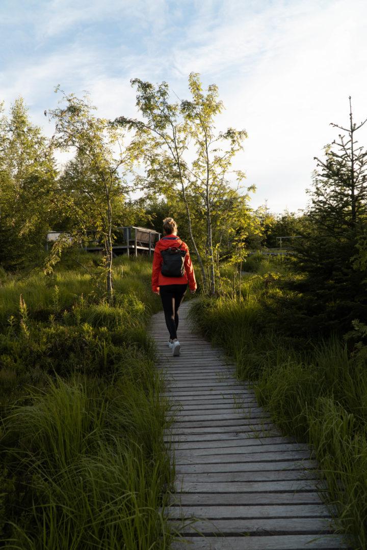 Wanderer im abendlicht zwichen Bäumen auf dem Lotharpfad durch das Hochmoor an derSchwarzwaldhochstraße. Wanderer geht über Holzplangen durch das Moor im Abendlicht.