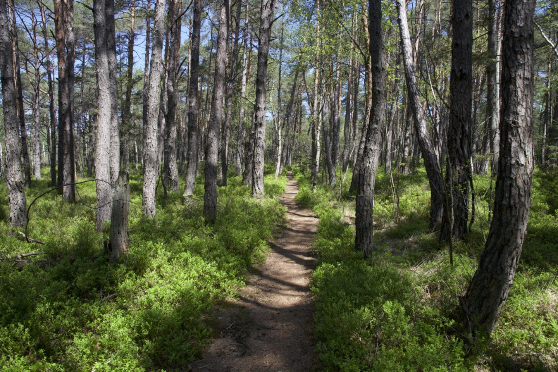 Waldgebiet im Grabenstättermoos, beliebter Ausflug am Chiemsee