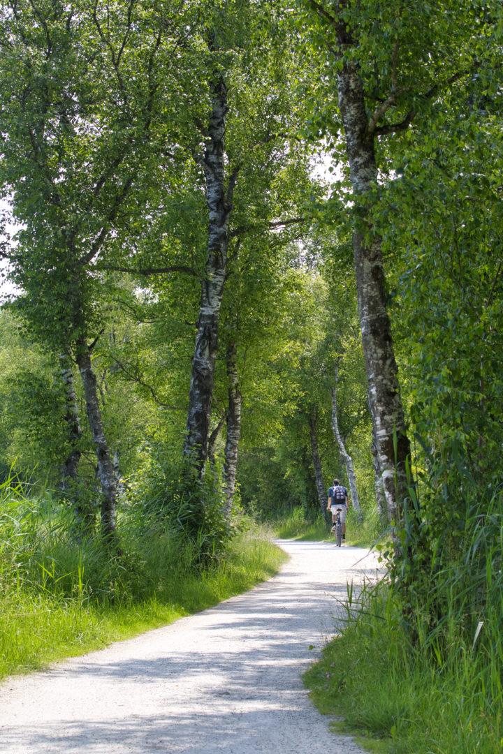 Radtour durch den Wald bei Weisham am Chiemsee.