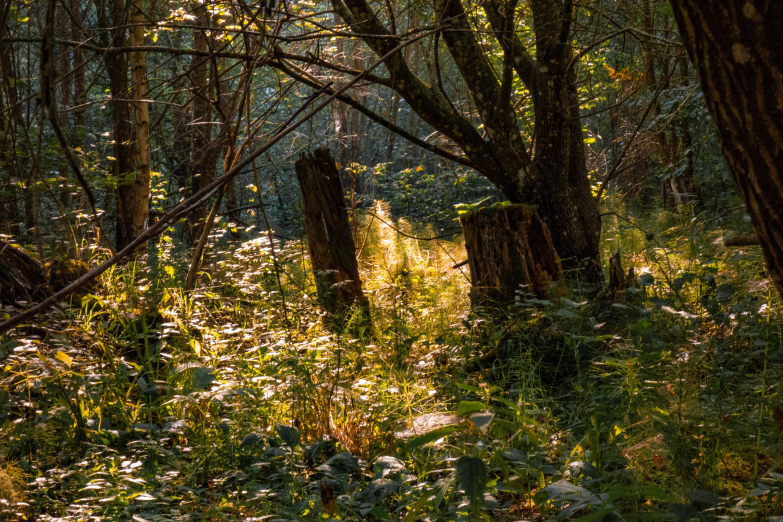 Trekking auf dem Schluchtensteig im Schwarzwald
