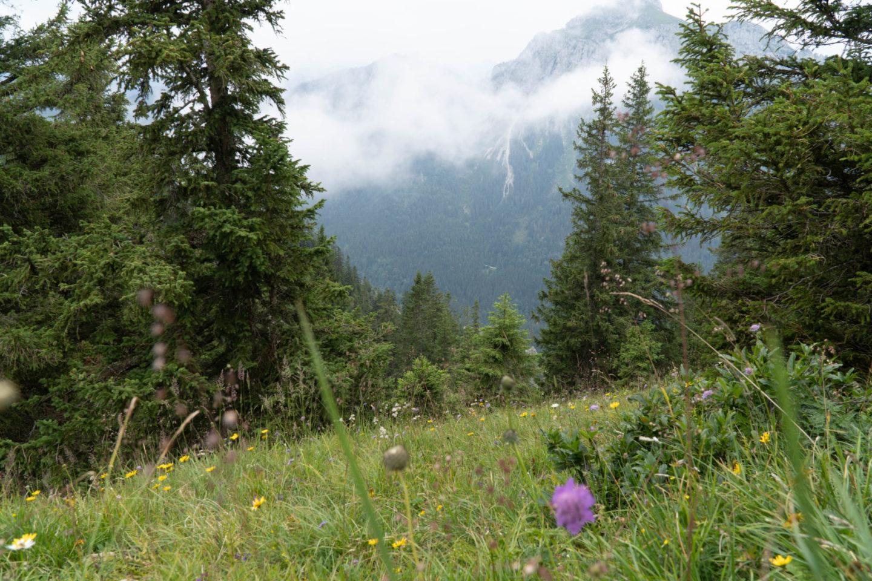 Das Allgäu bei Regen - Mystisch und Stimmungsvoll - Bergwiese im Nebel