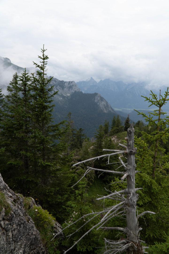 Allgäu bei Regen - Bäume im Nebel sind besonders mystisch.