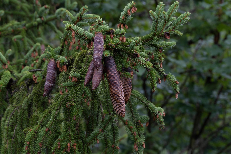 Allgäu bei Regen - Baumwipfelpfad Ziegelwies