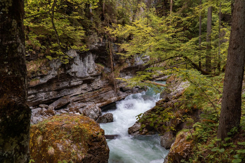 Die Breitach fliesst zwischen knorrigen Bäumen und Felsblöcken durch die Klamm..