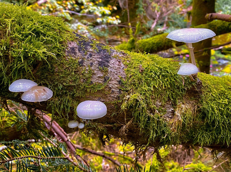 Pilze auf einem bemoosten Baumstamm im Nationalpark Bayericher Wald.