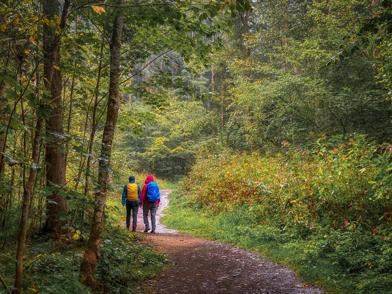 Wanderer zwischen Hohen Tannenn mit Waldpfad im Bayerischen Wald