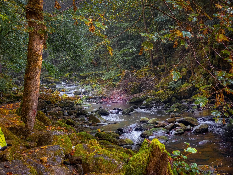 Die Wildwasserklamm Buchberger Leite im September umgeben von bemoosten Steinen und knorrigen Bäumen im Nationalpark Bayericher Wald.