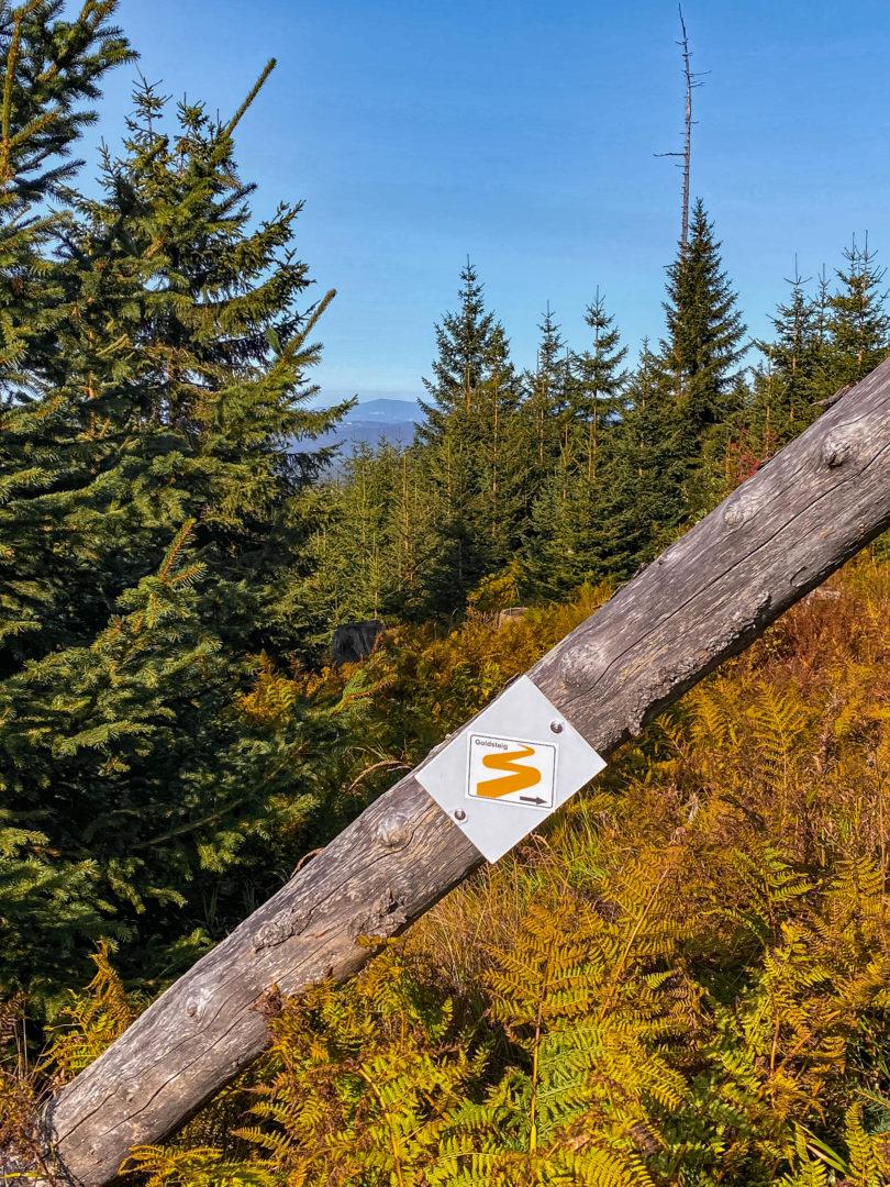 Dreisessel im bayerischen Wald im Herbst: Ausblick auf die Berchtesgadener Alpen mit totem Baum und Nadelbäumen.