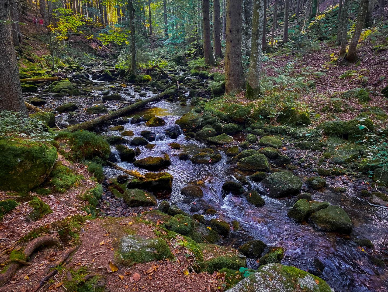 Wanderung im Herbst durch den Bayerischen Wald: Dichter Wald mit kleinem Bach und bemoosten Steinen.