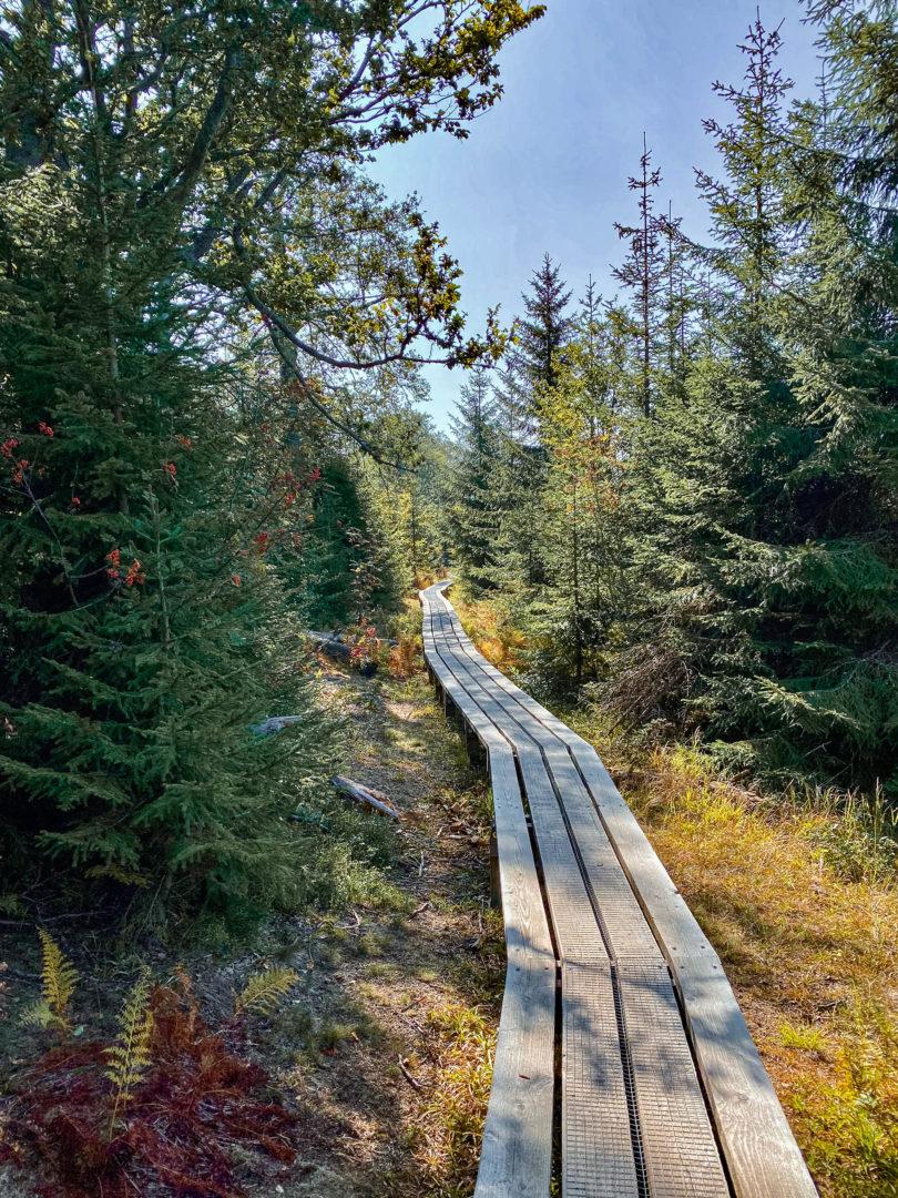 Wanderung über die Himmelsleiter zum Lusengipfel im Spetember im Bayerischen Wald.