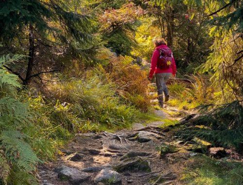 Titelbild Herbstwanderungen im Bayerischen Wald