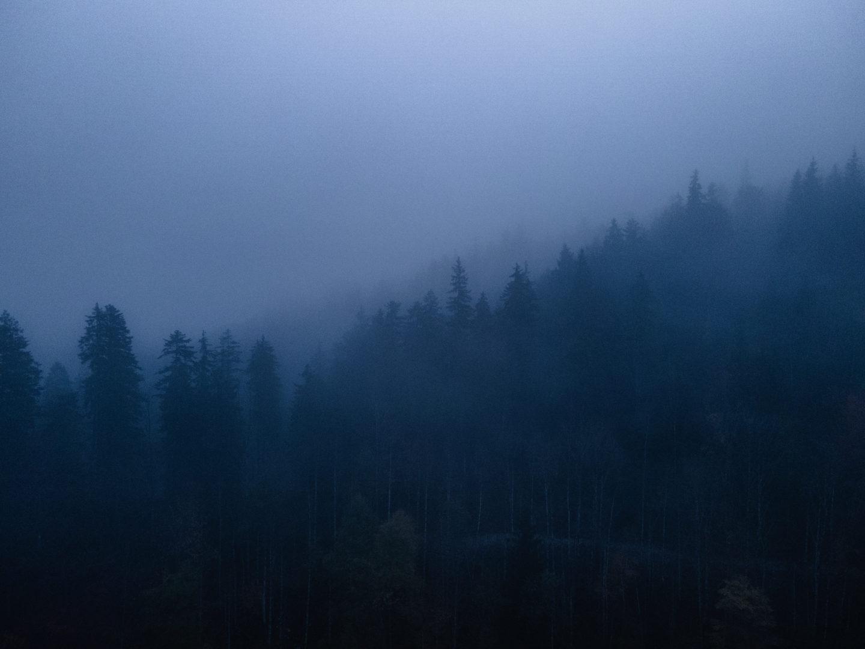 Roadtrip Bayern VW Campervan: Wald im Nebel bei Nacht.