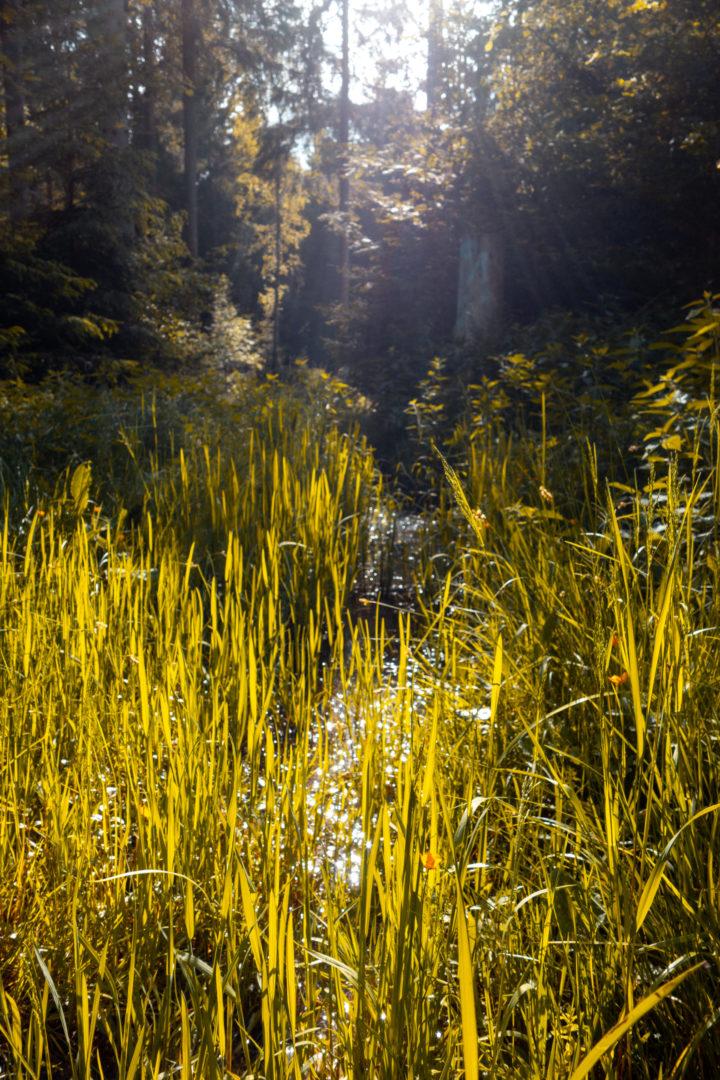 Moosbewachsener Wald in der Schwäbischen Alb im Wental beim Felsenmeer