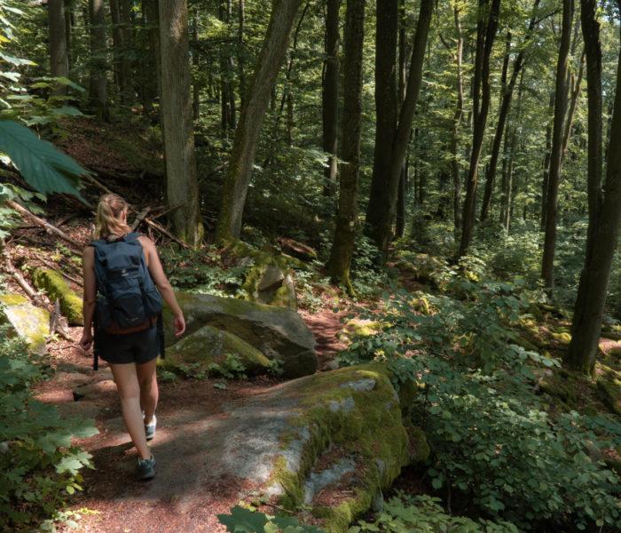 Über Felsen und Moose. Wanderung auf den Schwarzwihrberg und weiter zur Steinernen Wand.